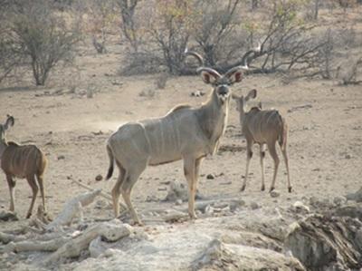 Natur & Miljø i Sydafrika