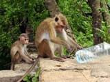 Monkey playing with water bottle