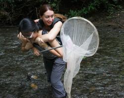 Conservation work