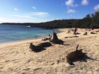 Beach in the Galapagos