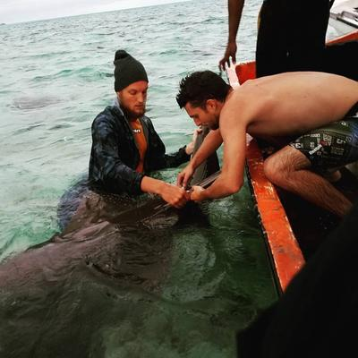 Conservation staff tagging a shark