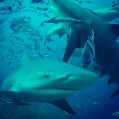 Sharks spotted in Fiji