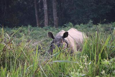 A rhino spotted during a jungle safari in Chitwan National Park