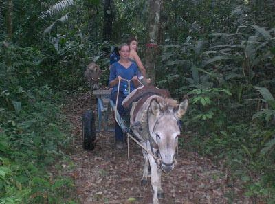 On donkey and cart in the jungle