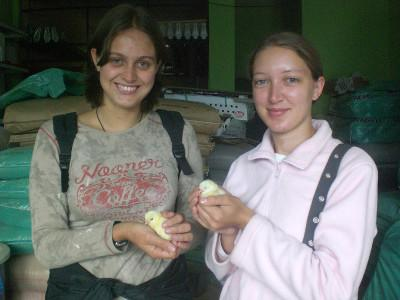With new born chicks