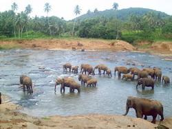 Wild elephants on our travels