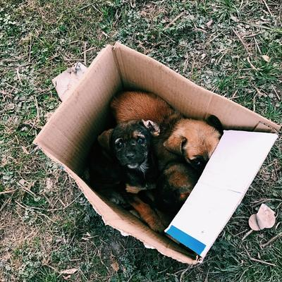 Puppies abandoned in a box