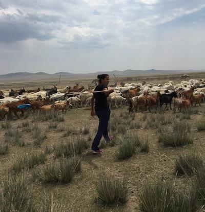 Anya herding the animals