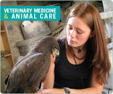 Veterinary Medicine & Animal Care