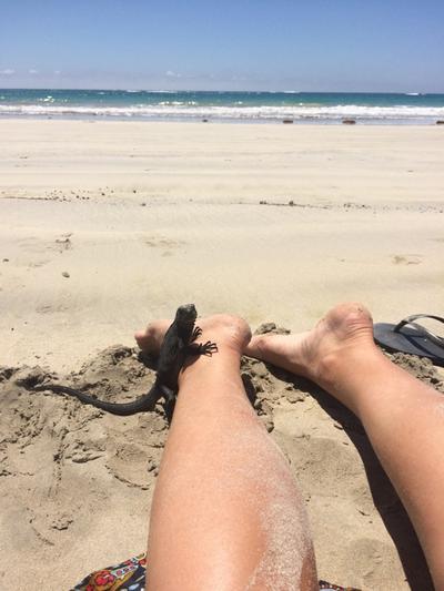 An iguana on a beach in Ecuador