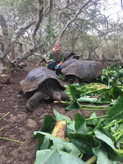 Giant tortoises eating at a local wildlife reserve