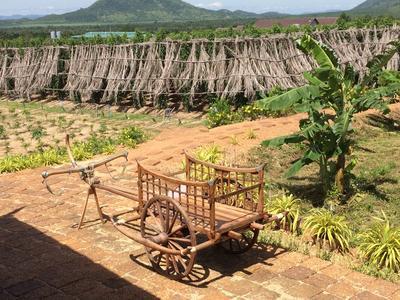 A local farm in Cambodia