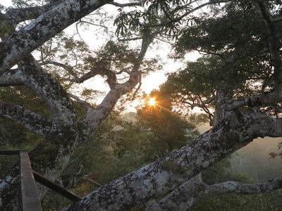 The beautiful nature at Taricaya Reserve