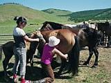 Milking the horses