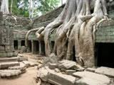 Ta prohm temples near siem reap