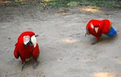 Conservation project Peru