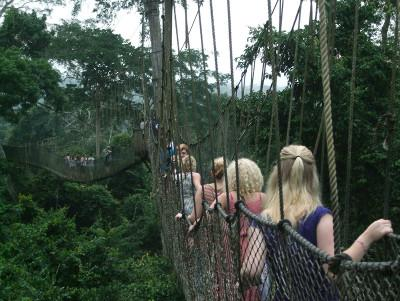 Canopy walkway on weekend trip