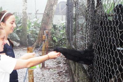 Feeding spider monkeys