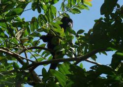 Monkey, close to camp