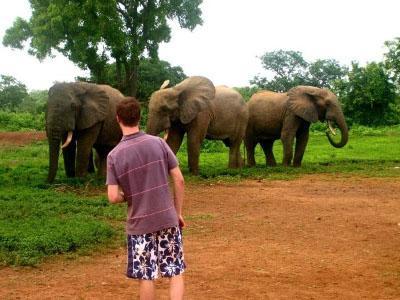 Elephants at Mole National Park