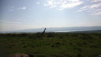 Giraffe spotting in Kenya