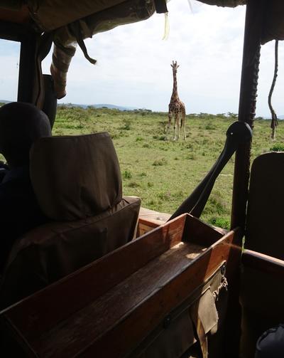 Volunteers park next to a giraffe in Kenya