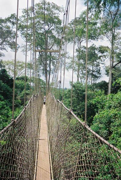 Canopy walkway Kakum