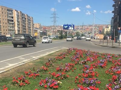 Beautiful flowers in Ulaanbaatar