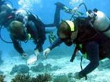 Conducting research whilst diving
