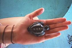 Holding a baby turtle