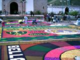Carpets of flowers