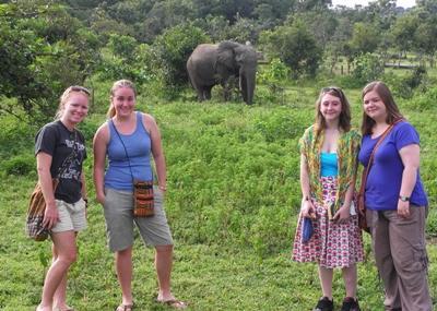 Elephant at Mole