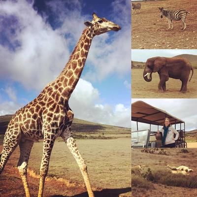 South African wildlife at a game reserve