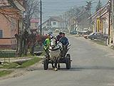 Horse and cart in the street