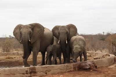 Elephants spotted in Botswana