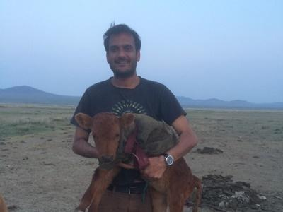 Volunteer holds a calf at his placement in Mongolia
