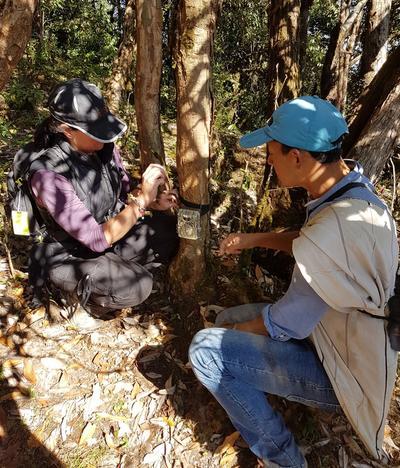 Sharon and Conservation staff setting up sensor cameras