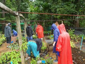 Reforestation work in Thailand