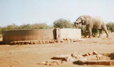 Elephant at a Conservation project in South Africa