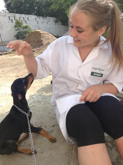 Working with the animals
