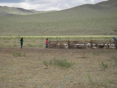 Volunteering in Mongolia