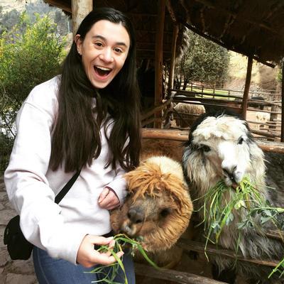Daniella feeding alpacas in Awana Kancha