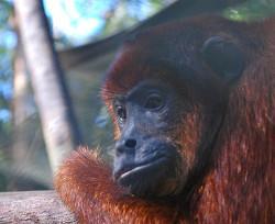 Animal centre Peru