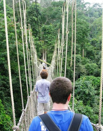 On the canopy walk