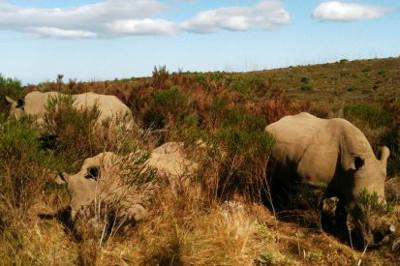 South Africa's amazing animals
