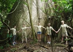 Giant tree in Kakum