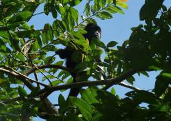 Monkey, close to camp