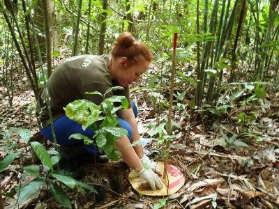 Conservation in Thailand