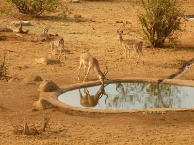 Volunteer with african wildlife