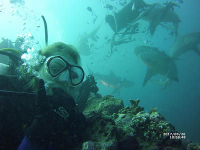 During a dive on the Shark Conservation Project